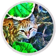 A Curious Cat Round Beach Towel
