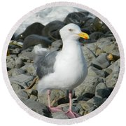 Round Beach Towel featuring the photograph A Curious Seagull by Chalet Roome-Rigdon