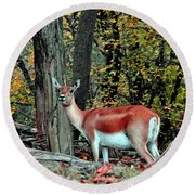 A Deer Look Round Beach Towel by Lydia Holly
