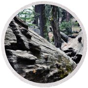 Round Beach Towel featuring the photograph A Fallen Giant Sequoia by Kyle Hanson