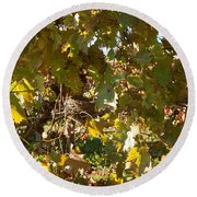 Round Beach Towel featuring the photograph A Few Grapes Left For The Birds by Carol Lynn Coronios