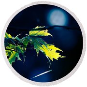 A Few Leaves In The Sun Two Round Beach Towel