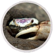 A Fiddler Crab Around Hilton Head Island Round Beach Towel by Kim Pate