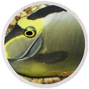 A Fish From The Ocean Round Beach Towel by Tom Janca