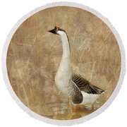Round Beach Towel featuring the photograph A Goose Is A Goose by Betty LaRue