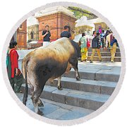 A Holy Cow Climbing Steps From Bagmati River In Kathmandu-nepal  Round Beach Towel