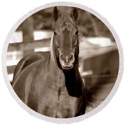 Round Beach Towel featuring the photograph A Horse Is A Horse by Deena Stoddard