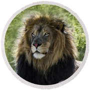 A Lion's Thoughts Round Beach Towel