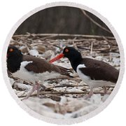 A Mated Pair Of Oyster Catchers Round Beach Towel