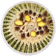A Mexican Golden Barrel Cactus With Blossoms Round Beach Towel by Tom Janca