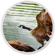 Round Beach Towel featuring the photograph A Pair Of Canada Geese Landing On Rockland Lake by Jerry Cowart