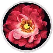 A Rose From The Shadows Round Beach Towel