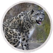 Round Beach Towel featuring the photograph A Snow Leopards Tongue by David Millenheft