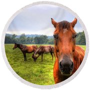Round Beach Towel featuring the photograph A Starring Horse 2 by Jonny D