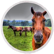 Round Beach Towel featuring the photograph A Starring Horse by Jonny D