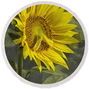Round Beach Towel featuring the photograph A Sunflower's Prayer by Betty Denise