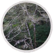 Round Beach Towel featuring the photograph A Tree Along The Oregon Coast by Tom Janca