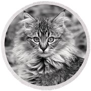A Young Maine Coon Round Beach Towel