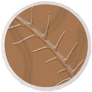 Abstract Branch Winter Net Leaf Hackberry Tree Round Beach Towel by Tom Janca