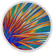 Abstract Feathered Seed Pod Round Beach Towel