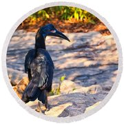Abyssinian Ground Hornbill Round Beach Towel by Chris Flees