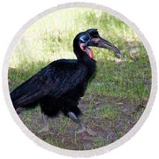 Abyssinian Ground-hornbill Round Beach Towel by Gregory G. Dimijian