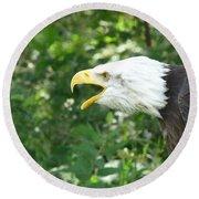 Round Beach Towel featuring the photograph Adler Raptor Bald Eagle Bird Of Prey Bird by Paul Fearn