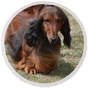 Adorable Long Haired Daschund Dog Round Beach Towel by DejaVu Designs