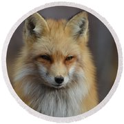 Adorable Red Fox Round Beach Towel