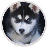 Adorable Siberian Husky Sled Dog Puppy Round Beach Towel by Kathy Clark