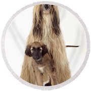 Afghan Hound And Puppy Round Beach Towel
