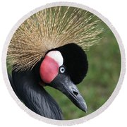African Crowned Crane #2 Round Beach Towel