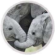 Round Beach Towel featuring the photograph African Elephant Calves Loxodonta by Panoramic Images