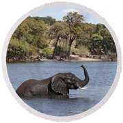 Round Beach Towel featuring the photograph African Elephant In Chobe River  by Liz Leyden