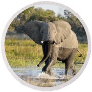 Round Beach Towel featuring the photograph African Elephant Mock-charging by Liz Leyden