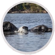 African Elephants Swimming In The Chobe River Botswana Round Beach Towel by Liz Leyden