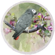 African Gray Among The Blossoms Round Beach Towel