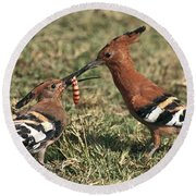 Round Beach Towel featuring the photograph African Hoopoe Feeding Young by Liz Leyden