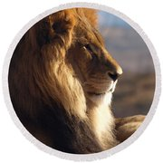 African Lion Round Beach Towel by James Peterson