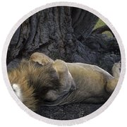 Round Beach Towel featuring the photograph African Lion Panthera Leo Wild Kenya by Dave Welling