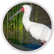 African Spoonbill Platalea Alba Round Beach Towel by Panoramic Images