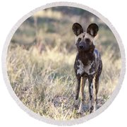 African Wild Dog  Lycaon Pictus Round Beach Towel by Liz Leyden