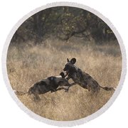 Round Beach Towel featuring the photograph African Wild Dogs Play-fighting by Liz Leyden