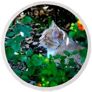 Round Beach Towel featuring the photograph Afternoon Nap Interrupted by Susan Wiedmann