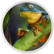 Agalychnis Calcarifer 4 Round Beach Towel by Arterra Picture Library