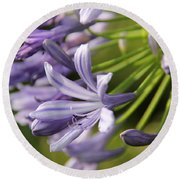 Agapanthus Flower Close-up Round Beach Towel