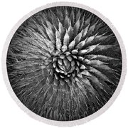 Agave Spikes Black And White Round Beach Towel