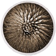 Agave Spikes Sepia Round Beach Towel