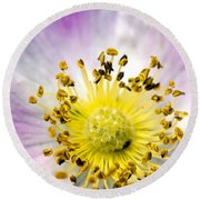 Alberta Wild Rose Round Beach Towel by Dee Cresswell