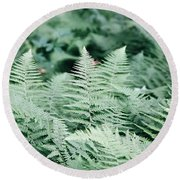 Round Beach Towel featuring the photograph Algonquin Ferns by David Porteus